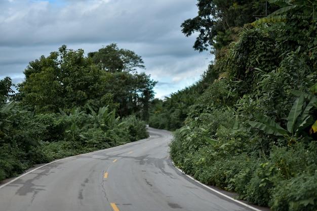 Landweg in het regenseizoen met bomen naast concept