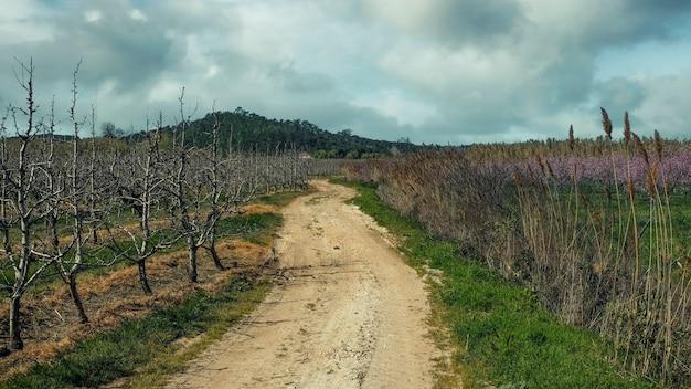 Landweg tussen velden met bloeiende amandelbomen naar een landelijk huis. lente in portugal in het gebied van de stad obidos