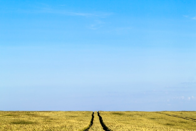 Landwegweg in een landschap van het tarwegebied in de zomer