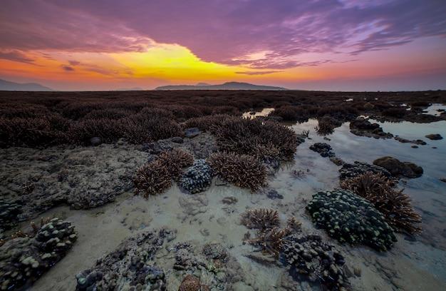 Lang blootstellingsbeeld van dramatische hemel en zeegezicht met koraalriffen in zonsopgang