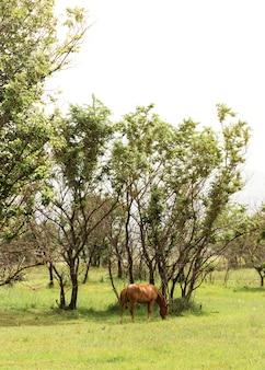 Lang geschoten bruin paard op gebied
