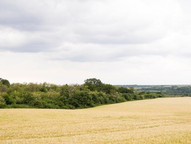 Lang geschoten landschap met landbouwgebied