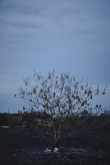 Lang schot van een de herfstboom met hekserijelementen