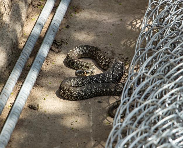 Lange bruine niet-giftige slang in de tuin