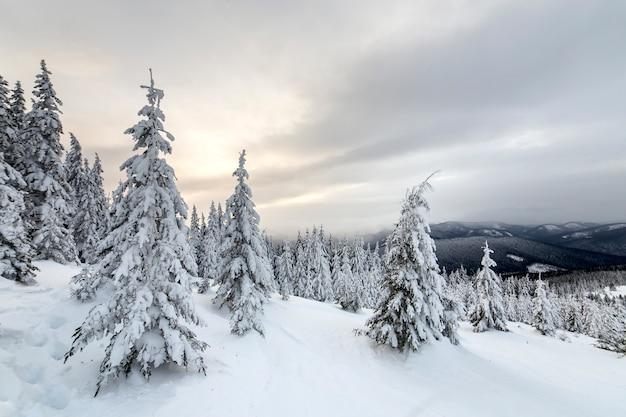 Lange donkergroene sparren bedekt met sneeuw op bergtoppen en bewolkte hemel.