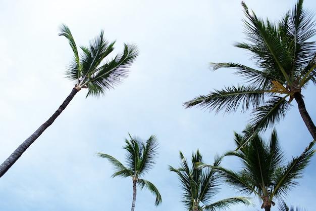 Lange groene palmen stijgen naar blauwe zomerhemel op het strand