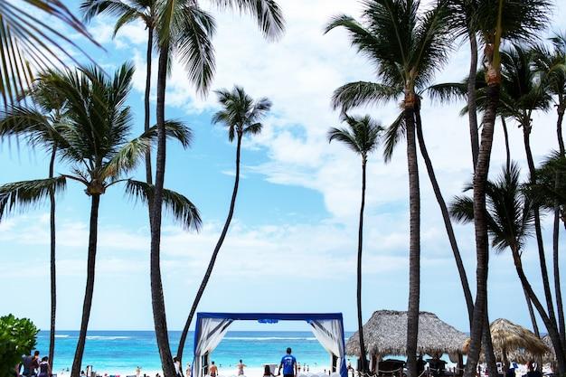 Lange groene palmen stijgen naar de blauwe zomerhemel