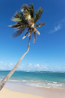 Lange palmboom in caraïbisch strand in de zomer