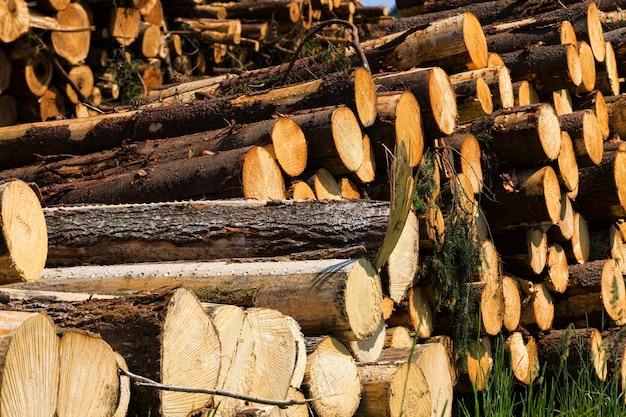 Lange stammen van natuurlijk dennenhout tijdens het loggen van houtbewerking in productie, in het bos