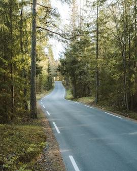 Lange weg omgeven door groene natuur