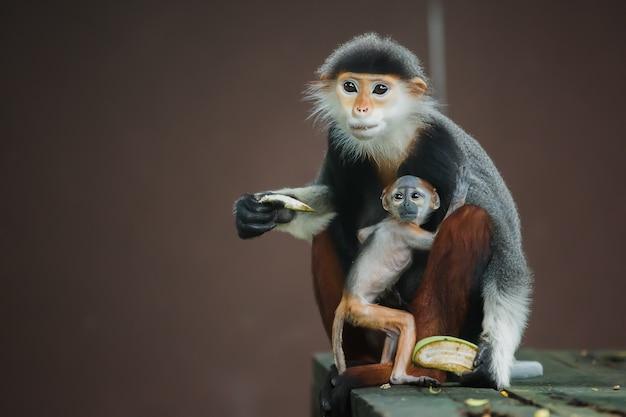 Langur aap moeder en baby eten.