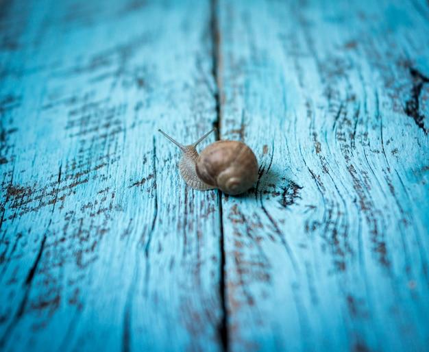 Langzame slak die zich op oude houten achtergrond beweegt