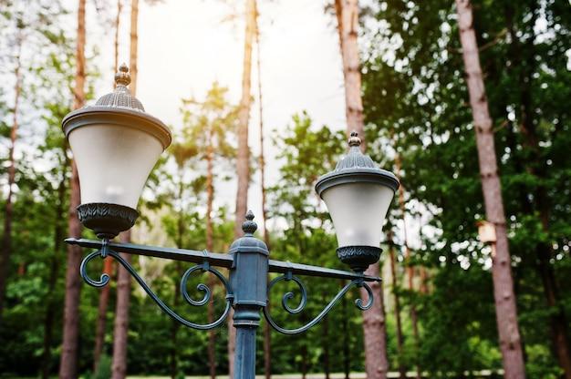 Lantaarn bij pijnboomhout op zonnig