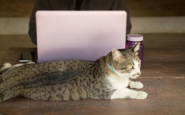 Laptop op houten tafel bij kat café