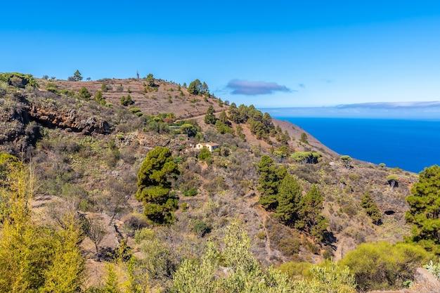 Las tricias-pad en zijn prachtige drakenbomen in de stad garafia in het noorden van het eiland la palma, canarische eilanden