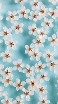Lat lag van drijvende wilde kersen witte bloemen op het oppervlak van water, pastel blauwe achtergrond