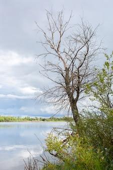 Late herfst, een boom zonder gebladerte boven de rivier met een bewolkte hemel