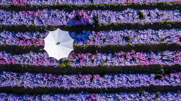 Lavendel bloem veld met paraplu