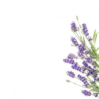 Lavendel bloemen bloemenrand witte achtergrond