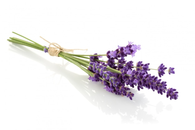 Lavendel bloemen bundel op een witte achtergrond