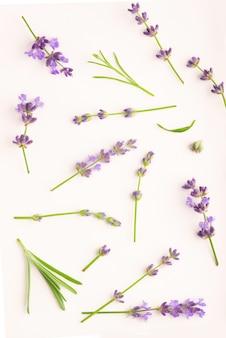 Lavendel bloemen bundel op een witte achtergrond.