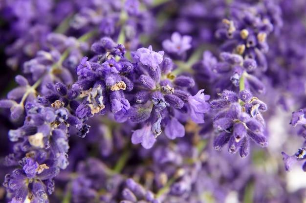 Lavendel bloemen close-up