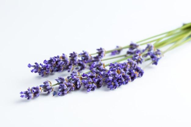Lavendel bloemen geïsoleerd