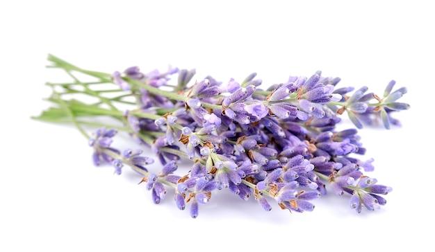 Lavendel bloemen op een witte achtergrond