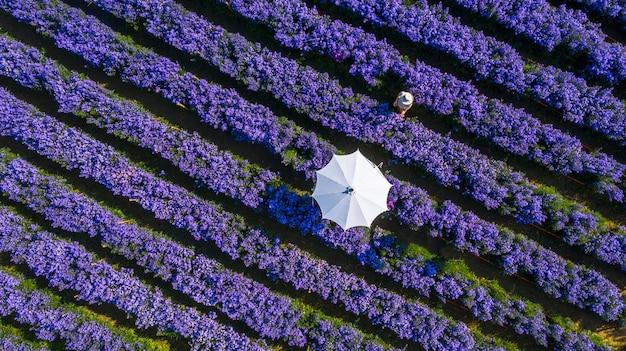 Lavendel bloemenveld met paraplu