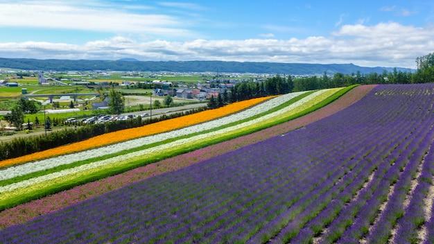 Lavendel en een ander bloemgebied in hokkaido - japan, aardachtergrond