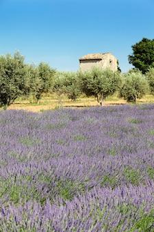 Lavendel en huisje