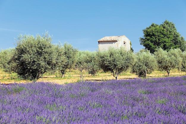 Lavendel land