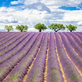 Lavendel veld met bewolkte hemel, frankrijk, europa