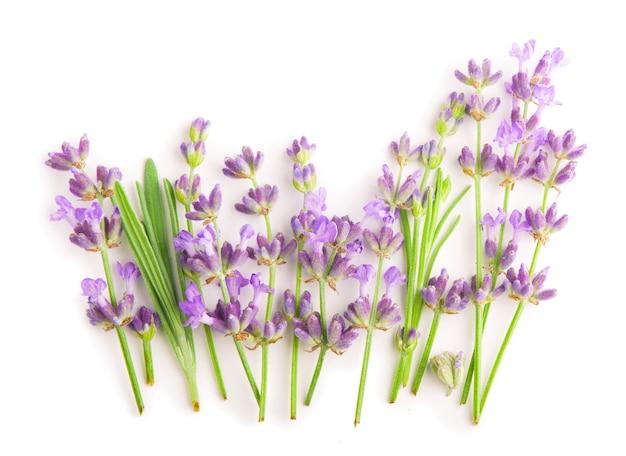 Lavendelbloemen bundelen op een witte ondergrond.