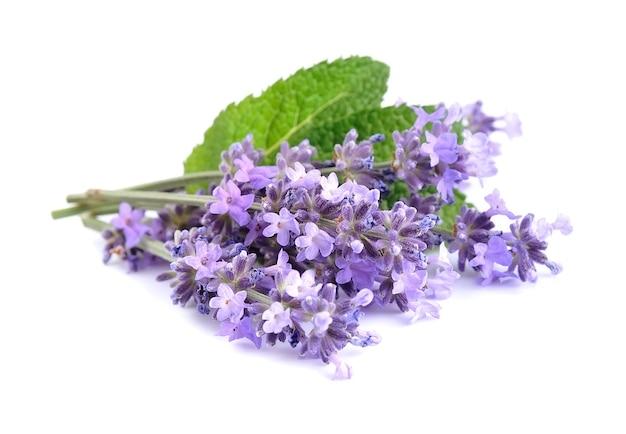 Lavendelbloemen met bladeren die op wit worden geïsoleerd