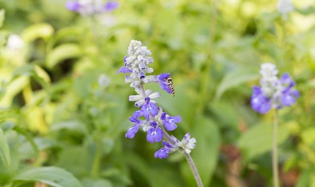Lavendelbloemen op een gebied.