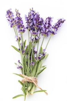 Lavendelbloemen op een witte achtergrond