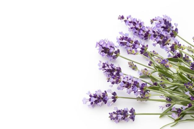 Lavendelbloemen op een witte achtergrond.