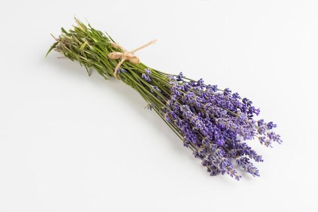 Lavendelbloemen op wit worden geïsoleerd dat