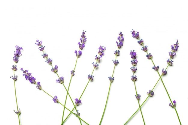 Lavendelbloemen op wit