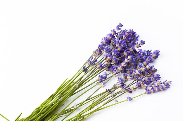 Lavendelbloemen op witte achtergrond worden geïsoleerd die