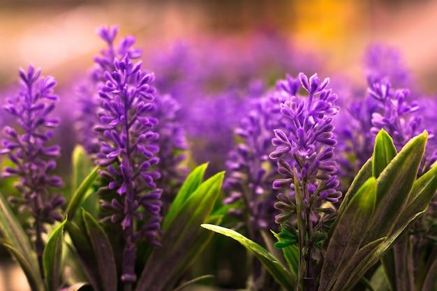 Lavendelbloemen, pastelkleuren en onduidelijk beeldachtergrond.