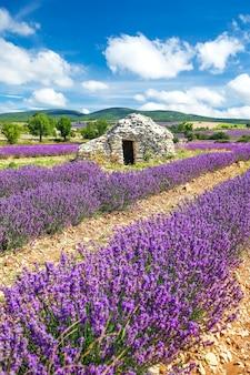 Lavendelveld dichtbij banon, frankrijk