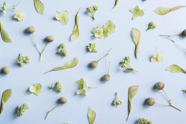 Lay-out van groen plantenpatroon op een bloementhema op een blauwe achtergrond
