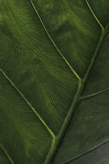Leaf wallpapers, mobiele wallpapers.