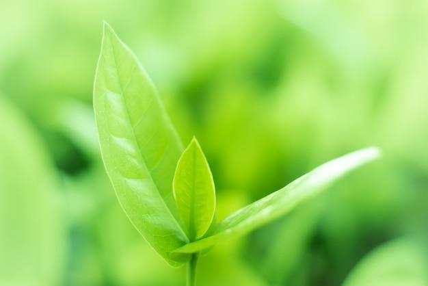 Leaved groene aardachtergrond.