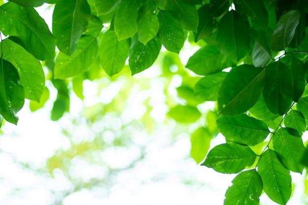 Leaved groene natuurlijke achtergrond.