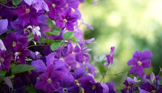 Lederen bloem, textuur. natuurlijke abstracte achtergrond. selectieve aandacht.