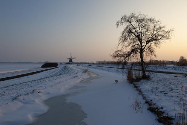Leeg besneeuwd veld met een boom en windmolengebouwen in de verte