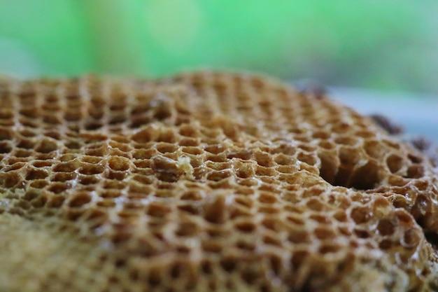 Leeg nest van apis-florea of dwerghoningbij